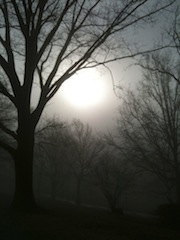 Image of trees and sun in fog