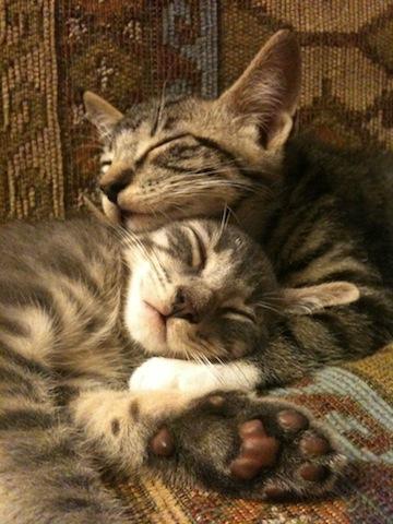 Image of two kittens sleeping