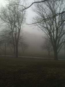 Image of trees in fog, photography by R. Isip