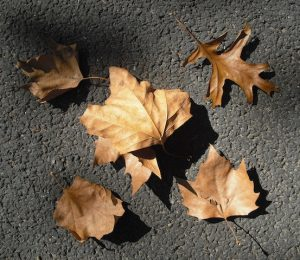 Image of a collection of leaves