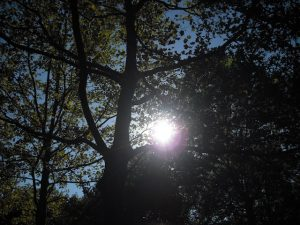 Image of a sun in a tree, photography by R. Isip